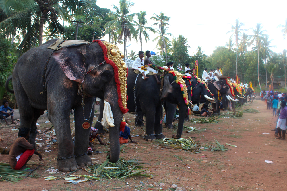 Elephants in Goa